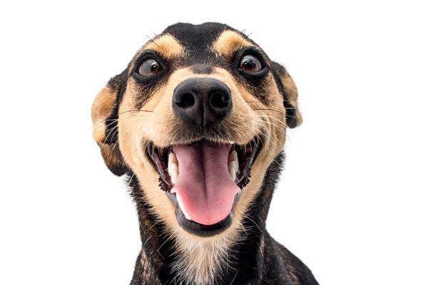 Vereadores fazem indicação para a criação de um Departamento de Bem Estar Animal e Conselho Municipal de Proteção e Bem-estar Animal