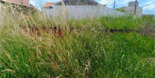 Tropical: Hallberg cobra fiscalização em terreno tomado por mato alto